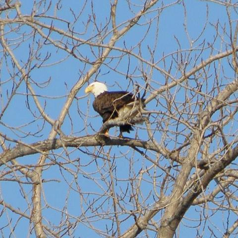 The Best Places to Watch Bald Eagles