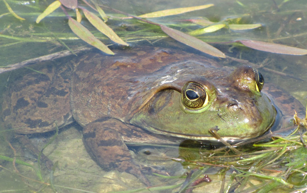Wild Things: Froggy Friday