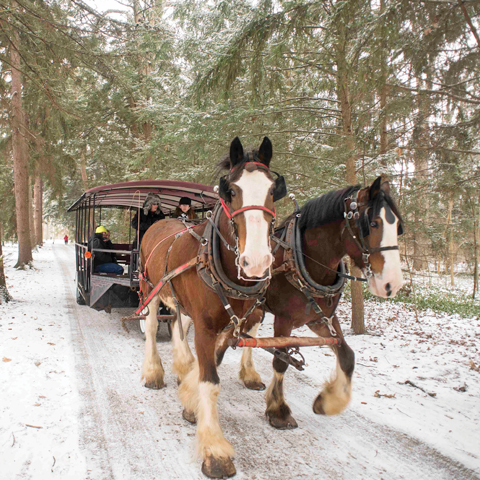 Horse-Drawn Sleigh Rides Through Spiegel Grove