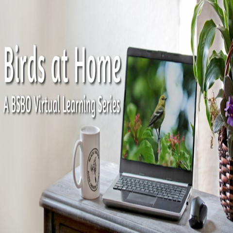 Birds at Home: A BSBO Virtual Learning Series