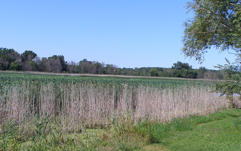 Meadowbrook Marsh