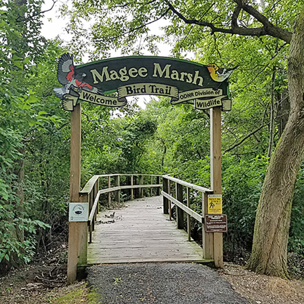 Magee Marsh Wildlife Area